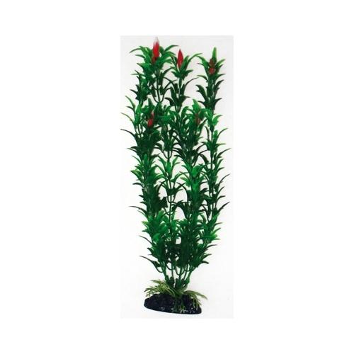 PLANTE EGERIA FLOWERS BICOLOUR 18cm