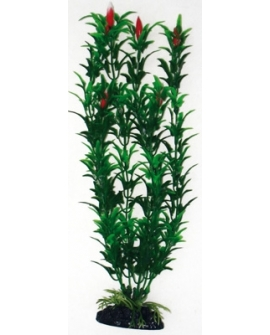 PLANTE EGERIA FLOWERS BICOLOUR 27cm