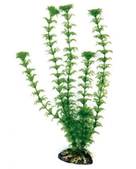 PLANTE CABOMBA 18cm
