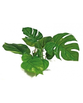 PLANTE ANUBIAS 15cm