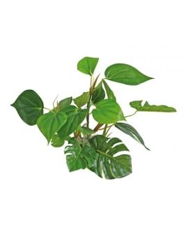 PLANTE ANUBIAS 20cm