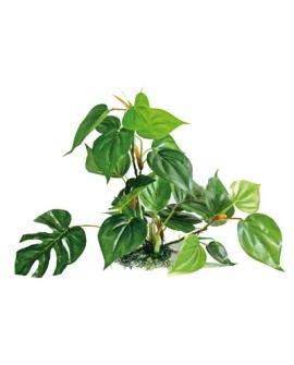 PLANTE ANUBIAS 30cm