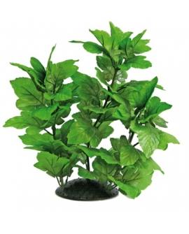 PLANTE HYGROPHILA 30cm