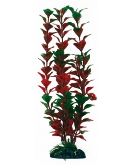 PLANTE LUDWIGIA 12cm