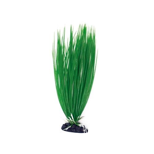 PLANTE ACORUS 12cm