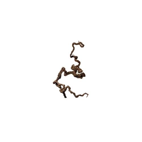 RACINE DE VIGNE 40 à 75cm 1p