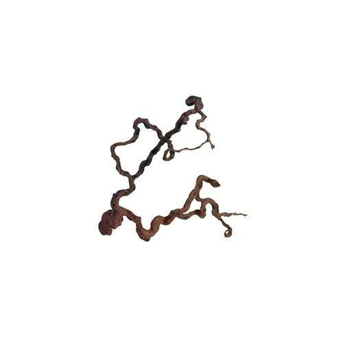RACINE DE VIGNE 80 à 100cm 1p