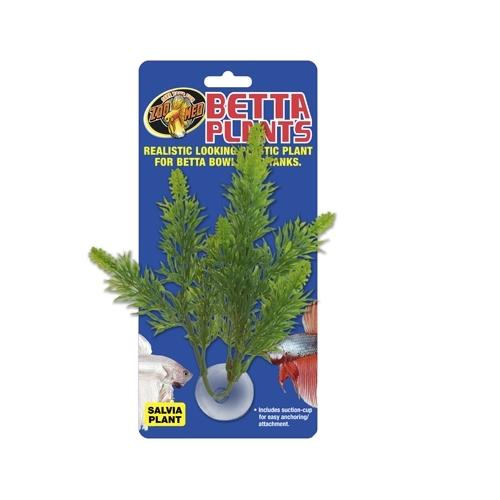 Betta Plant Salvia ZOOMED