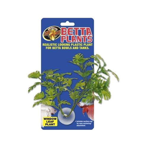 Betta Plant Window Leaf ZOOMED