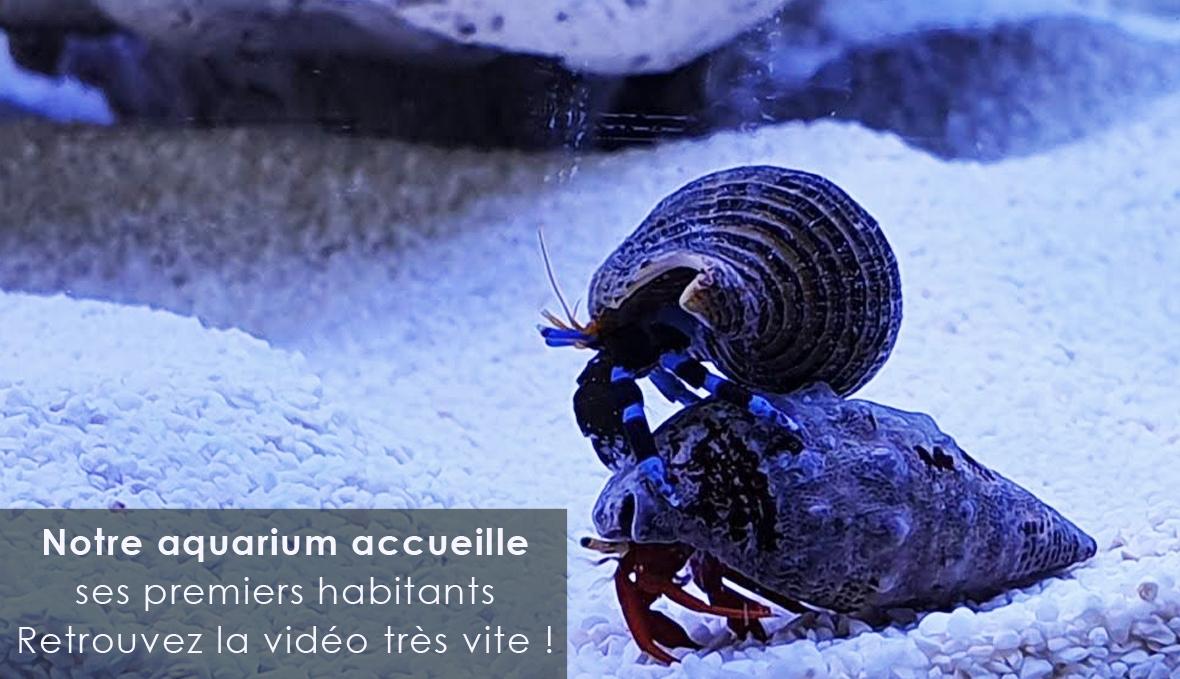 Vidéo Eheim