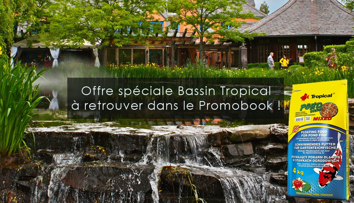 Bassin Tropical